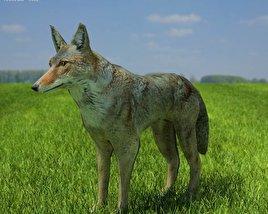 3D model of Coyote