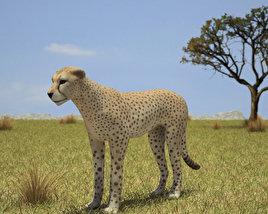 3D model of Cheetah