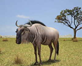 3D model of Wildebeest