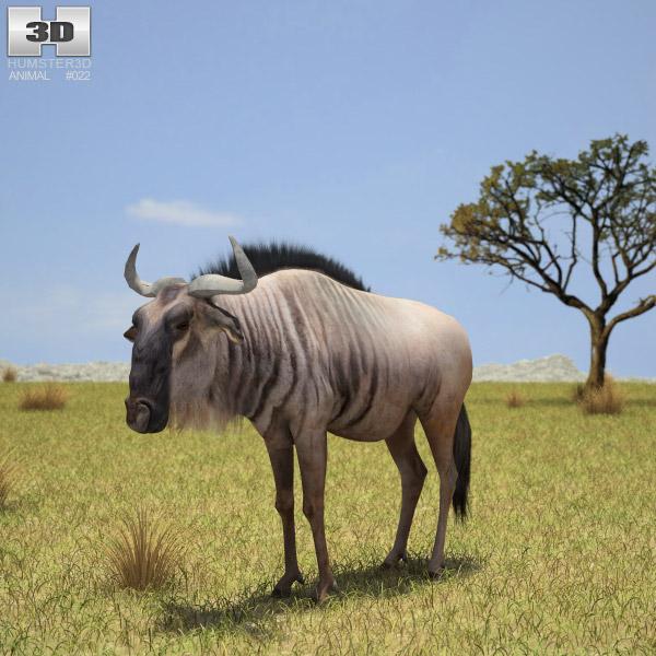 Wildebeest 3d model