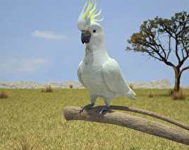 Cockatoo 3D model