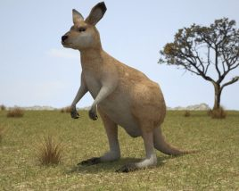 3D model of Kangaroo Joey