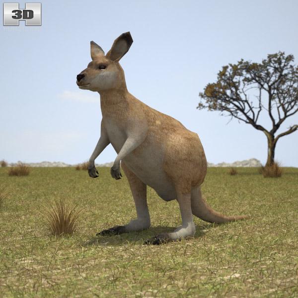 3D model of Kangaroo Joey