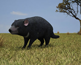 3D model of Tasmanian Devil