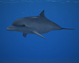 3D model of Common Bottlenose Dolphin