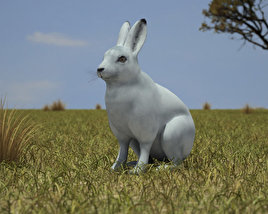 3D model of Arctic Hare
