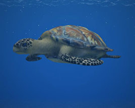 3D model of Hawksbill Sea Turtle