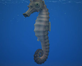 3D model of Seahorse