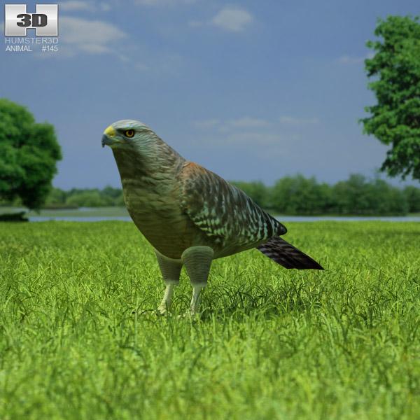 Red-Shouldered Hawk 3D model