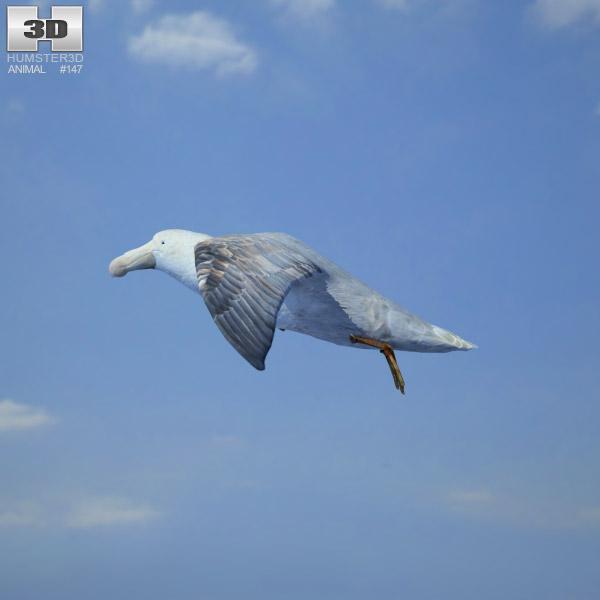 Southern Giant Petrel 3d model
