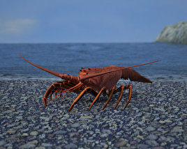 3D model of Spiny Lobster