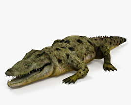 3D model of Common Crocodile HD
