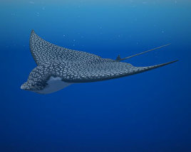 3D model of Spotted Eagle Ray