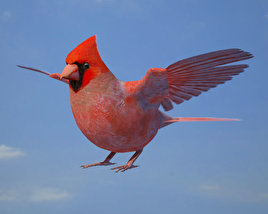 3D model of Northern Cardinal