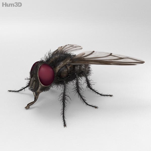 3D model of Housefly HD