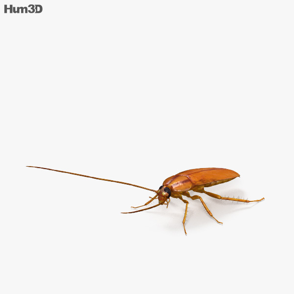 Cockroach HD 3D model