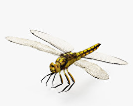 3D model of Dragonfly HD