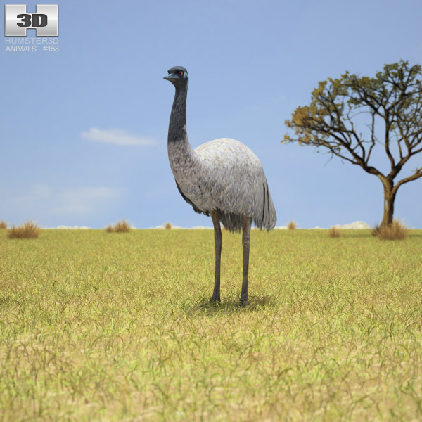 3D model of Emu