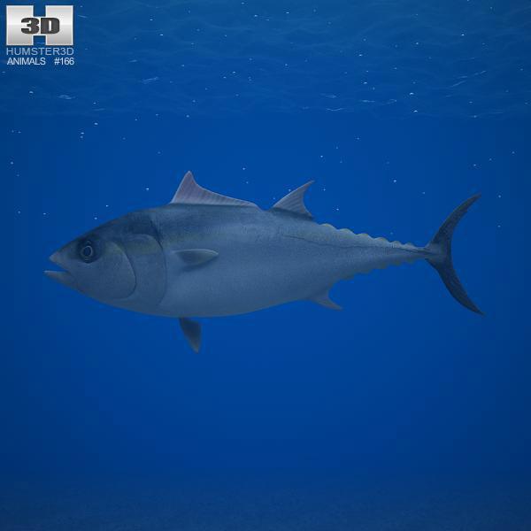 Atlantic Bluefin Tuna 3d model