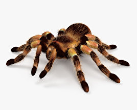 3D model of Tarantula HD