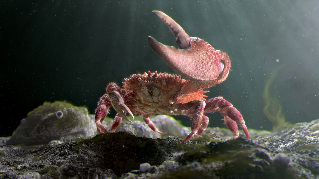mr.crab
