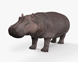 3D model of Hippopotamus HD