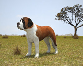 3D model of St. Bernard