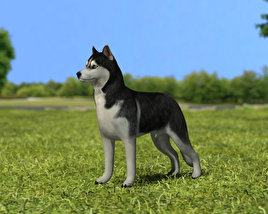 3D model of Siberian Husky