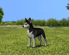 3D model of Siberian Husky Puppy