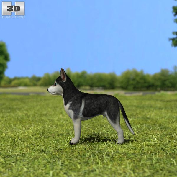 Siberian Husky Puppy 3d model