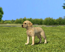 3D model of Labrador Retriever Puppy