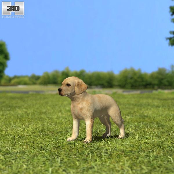 3D model of Labrador Retriever Puppy
