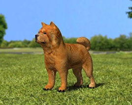 3D model of Chow Chow