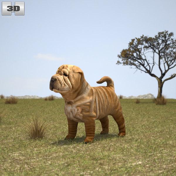 3D model of Shar Pei Puppy