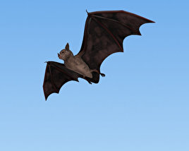 3D model of Common Bat