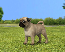 3D model of Pug Puppy