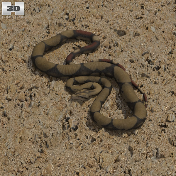 3D model of Boa Constrictor