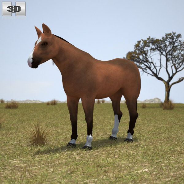 Thoroughbred 3D model