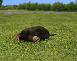 3D model of Star-Nosed Mole