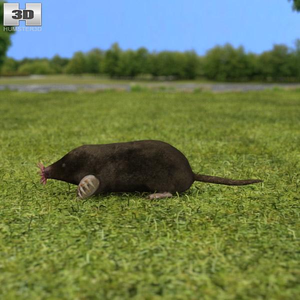 Star-Nosed Mole 3d model