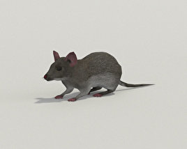 Mouse Gray 3D model