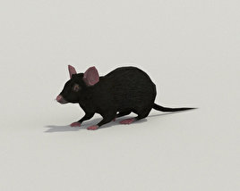 3D model of Mouse Black