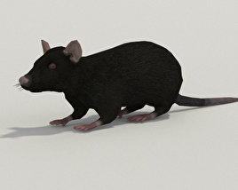 3D model of Black Rat