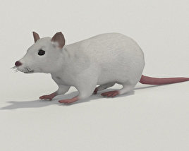 3D model of White Rat