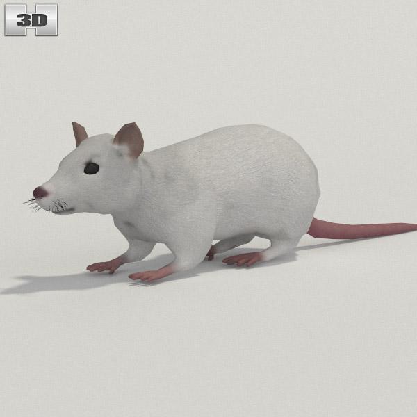 White Rat 3d model
