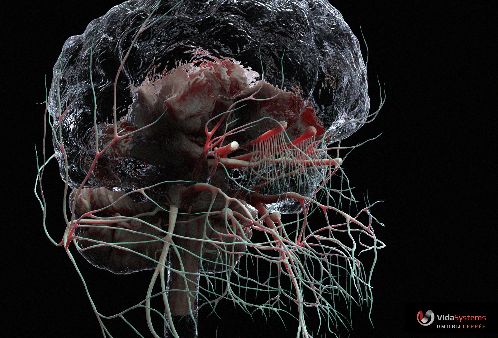 CNS - Nerves of the cranium by Dmitrij Leppée