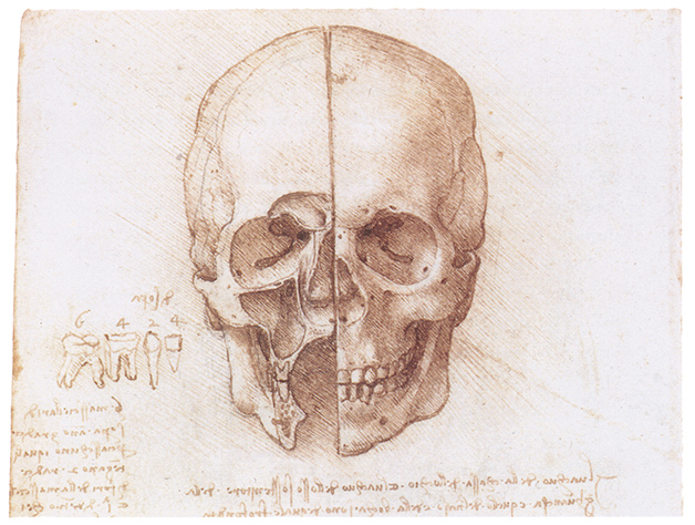 Human skull by Leonardo da Vinci
