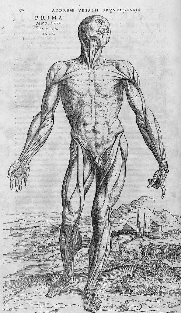 Andreas Vesalius, 1542