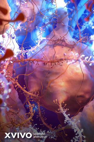 Neurons by xVivo studio