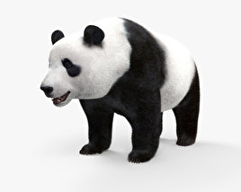 3D model of Giant Panda HD